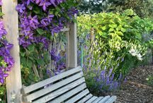 Oh so green...my garden / Gardening tips, gardening dreams... / by Tnit Taylor