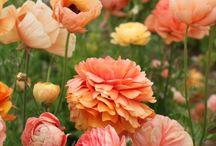 Flowers / by Alex Bennett