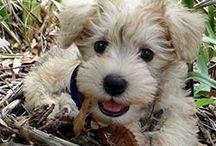 Adorable Animals / by Regina Combs