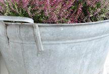Gardening / by Melissa Riley