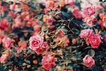 Colors / by Loredana Croci