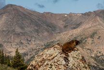 EcoWest Wildlife / by Mitch Tobin