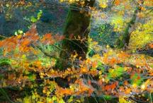 09 Selva  Irati en Navarra / La Selva del Irati en Navarra es un de los entornos turísticos más   visitados por parte de los turistas que cada año vienen a conocer Navarra Naturalmente. www.casaruralnavarra-urbasaurederra.com http://nacedero-rio-urederra.blogspot.com.es/ / by Casa Rural Urbasa Urederra