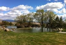 Douglas County Beauty  / by Douglas County Nevada