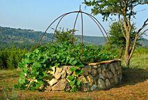 Gardening Ideas / by Melissa Wild