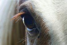 Horses / by Madisen Worst