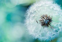 Make a Wish / by Molly Binks