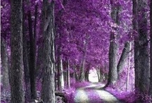 purple / by Delores Holleman