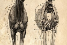 scientific illustration / by Christine O'Neil