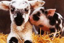critters and farm sorta stuff / by Emily Bierce