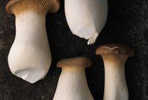 fungi & friends / by biobabbler