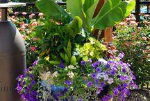 Container gardens / by Nicole De Sanctis