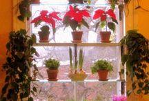 My house: Kitchen/Indoor Garden / by Nicole White