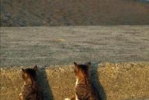 Animals  / by Courtney Butler
