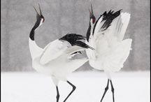 Birds / by Yvette Kia Robinson