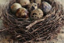 Egg / by Ben Nutter