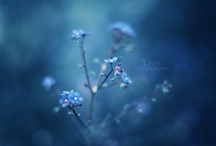All shades of BLUE / by Meta B