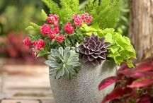 Container gardens / by Pat Cramer Kennedy