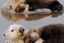 Otters / by Binghamton Zoo
