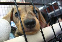How you can help / by Corpus Christi Animal Care Services