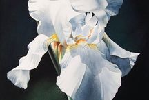 IRIS / by Kathy L Rose