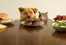 Homemade Dog Food / by Kathy Johnson
