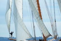 Sailing / by Dutch Bros. Garage