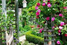gardening / by Joanne Riker