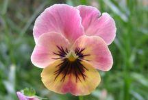 Flowers / by Lynell Stewart