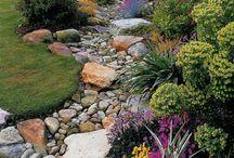 Gardening / by Tangela Rankin