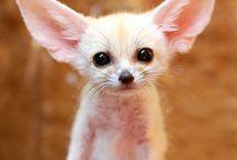 Cute! / by Raychel A