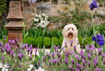 """Garden Passions  ❤  / Meet """"Phoebe in the Garden"""", our delightful Goldendoodle. Join her in exploring these beautiful garden pictures...  / by Linda L. Floyd Interior Design"""