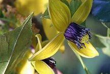 Flowers!!! / by Jo Blankenship
