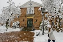 Snowy Campus / by LIU Post