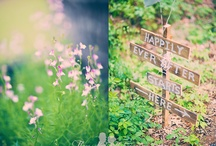 Dream Wedding / by Hayley Frerichs