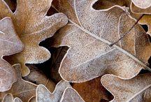 Seasons... / . / by Betsy Davis