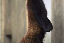 Animals I love / by Jennifer Derwin