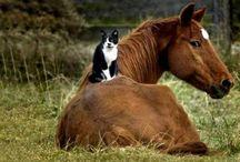 """Awwww... / Animals that make you go """"awwwww"""". / by Risha"""
