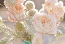Weddings / by Jordan Cachera