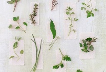 We Love to Garden / Sharing green-fingered ideas and activities in the garden for you and your family. / by Emily Button
