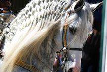 Hopelessly in Love With Horses / by Kathy McWilliams