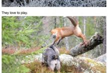 Animals / by Kitty Stoop