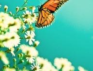 Butterfly Love / by Danielle Buttrey-Rakczynski