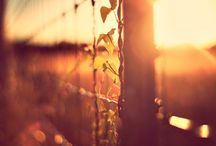 sunlight, sunrays & sunshine / Images glowing with sunlight. / by UMA Solar