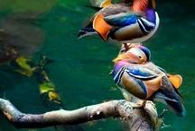 birds / by Michelle Wimer