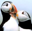 Puffins / by Jean Storrs