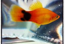 Aquarium / by Jessica Bollinger