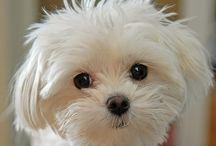 Cute Pets / by Linda Wheeling