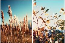 flora / by elliott kira