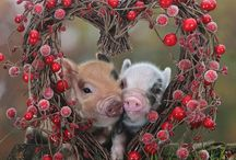 kyra's legit pigs  / by Amy Corrigan